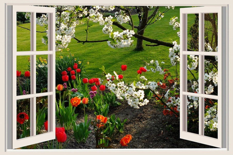 фотообои вид из окна на цветущую вишню низкорослым