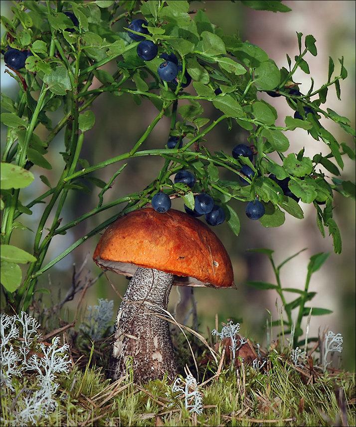 картинки грибочки в лесу анимация