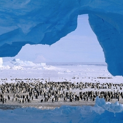 Пазл онлайн: Население Антарктиды