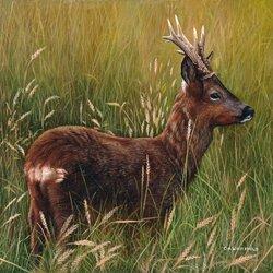 Пазл онлайн: Молодой олень