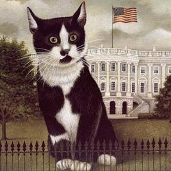 Пазл онлайн: Президентский кот