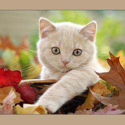 Пазл онлайн: Шуршащие листья