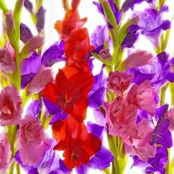 Пазл онлайн: Светящиеся цветы
