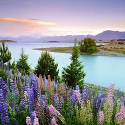 Пазл онлайн: Озеро Тепако, Новая Зеландия