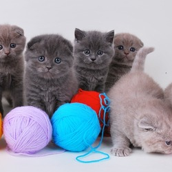 Пазл онлайн: Семеро котят