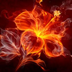 Пазл онлайн: Огненный цветок