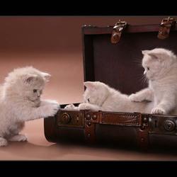 Пазл онлайн: В чемодане
