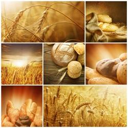 Пазл онлайн: Хлеб - всему голова