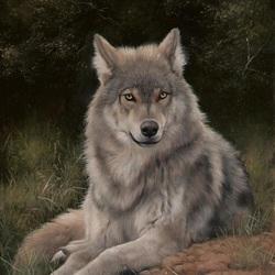 Пазл онлайн: Серый волк