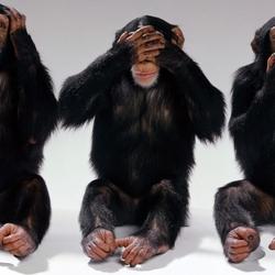 Пазл онлайн: Три обезьяны