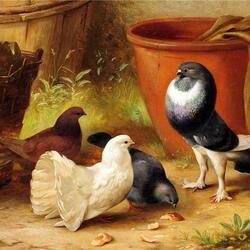 Пазл онлайн: Горделивый голубь