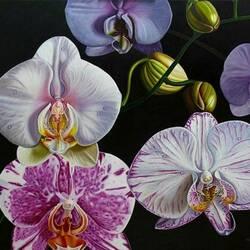 Пазл онлайн: Орхидейная фантазия
