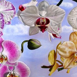 Пазл онлайн: Орхидеи-бабочки