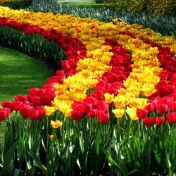 Пазл онлайн: Тюльпановая дорожка