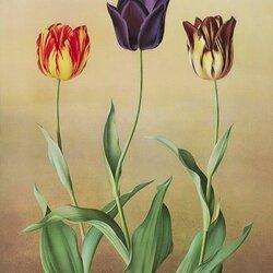 Пазл онлайн: Австралийские тюльпаны