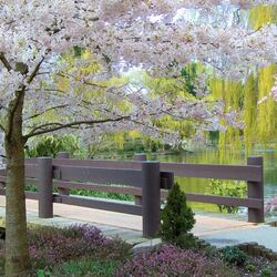 Пазл онлайн: Ханами - время сакуры