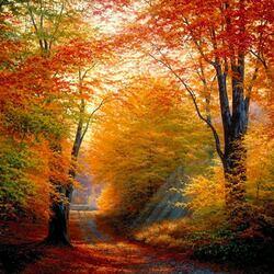 Пазл онлайн: Осень