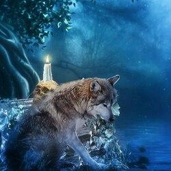 Пазл онлайн: Серый волк Мерлин