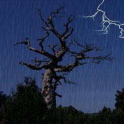 Пазл онлайн: Дерево сражается с грозой