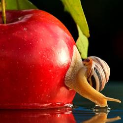 Пазл онлайн: Улитка и яблоко