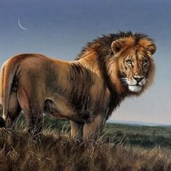 Пазл онлайн: Лев