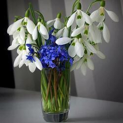 Пазл онлайн: Ранние цветы