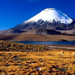 Пазл онлайн: Национальный парк Лаука, Чили
