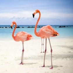 Пазл онлайн: Розовый фламинго