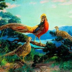 Пазл онлайн: Красногрудый красавец