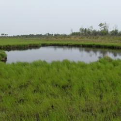 Пазл онлайн: Болотное озеро