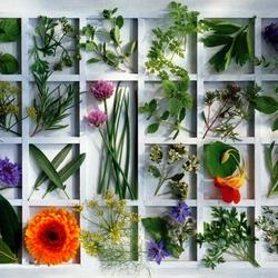 Пазл онлайн: Кухонные приправы / Kitchen Herbs