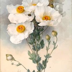 Пазл онлайн: Пчелки на белых цветах