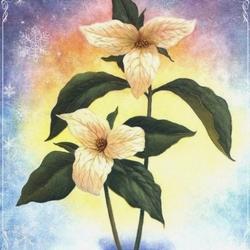 Пазл онлайн: Цветок на снегу