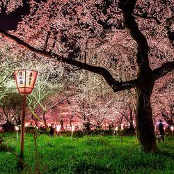 Пазл онлайн: Парк в Японии