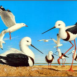 Пазл онлайн: Чайки
