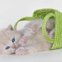 Пазл онлайн: Котенок с корзинкой