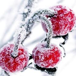 Пазл онлайн: Замёрзшие