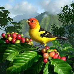 Пазл онлайн: Пиранга красноголовая или танагра западная