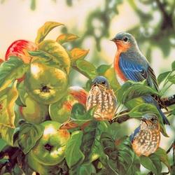 Пазл онлайн: На ветке яблони