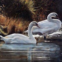 Пазл онлайн: Лебединая пара