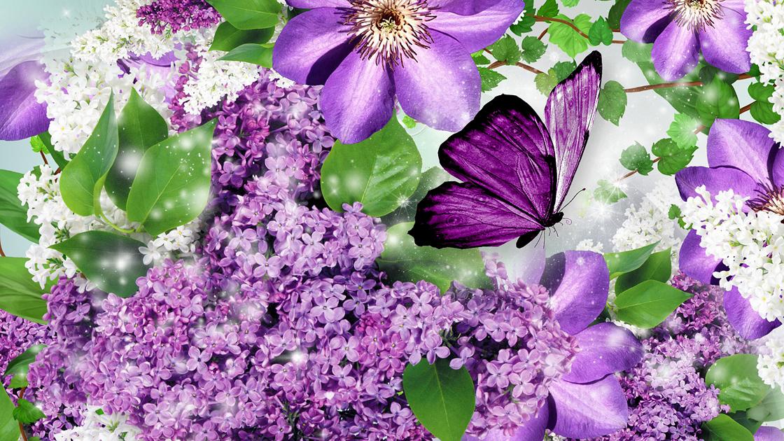 Картинка тюльпаны с бабочками сиреневые