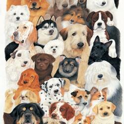 Пазл онлайн: Собаки