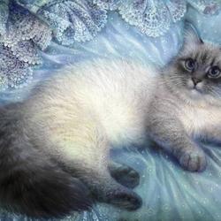 Пазл онлайн: Сибирский кот