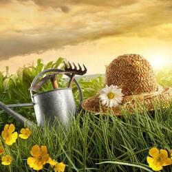Пазл онлайн: Набор огородника