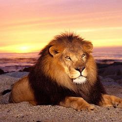 Пазл онлайн: Король отдыхает