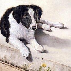 Пазл онлайн: Чёрно-белый пёс