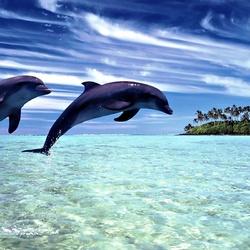 Пазл онлайн: Игра дельфинов