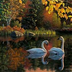 Пазл онлайн: Лебеди на пруду