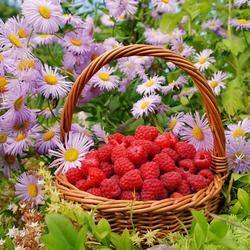 Пазл онлайн: Ягодки - цветочки