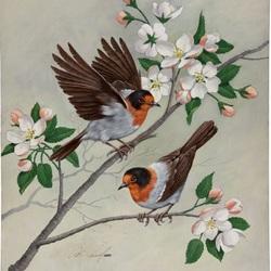 Пазл онлайн: Птички на яблоневой ветке